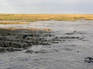 mud-thames-estuary