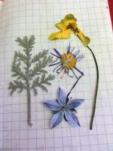 flat-fleurs