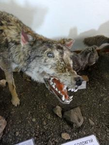bad-wolf