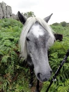 pony on track